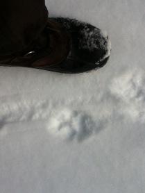 Feline track